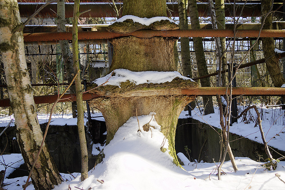 Baum frisst Geländer
