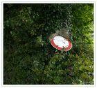 Baum frißt Schild