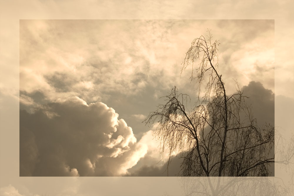 Baum gen Himmel