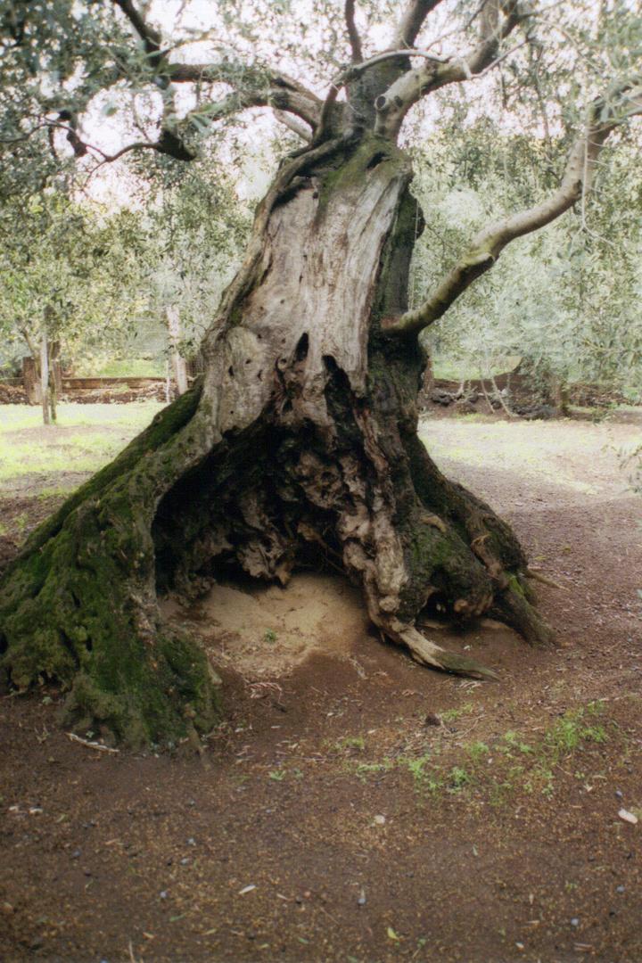 Baum-geschichte