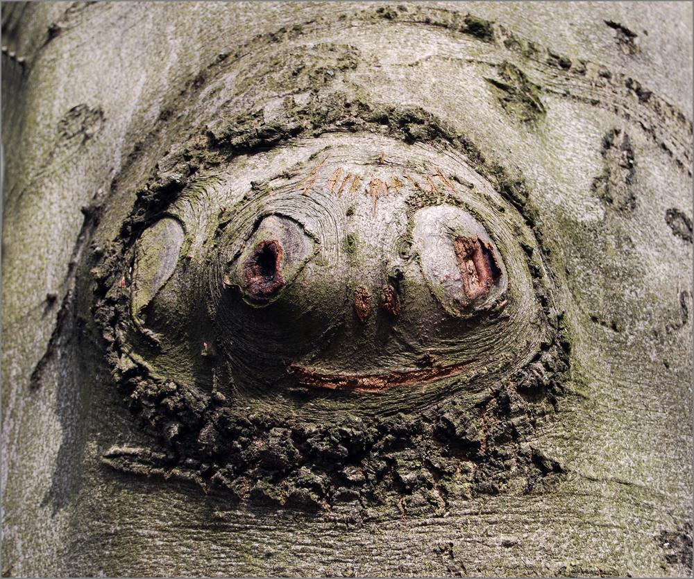""""""" Baum - Gesicht """""""