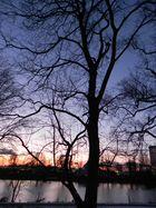 Baum grüßt die Nacht