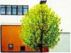 Baum-Haus