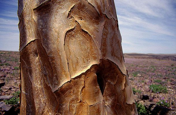 Baum hautnah