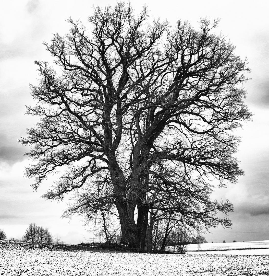 Baum HDR