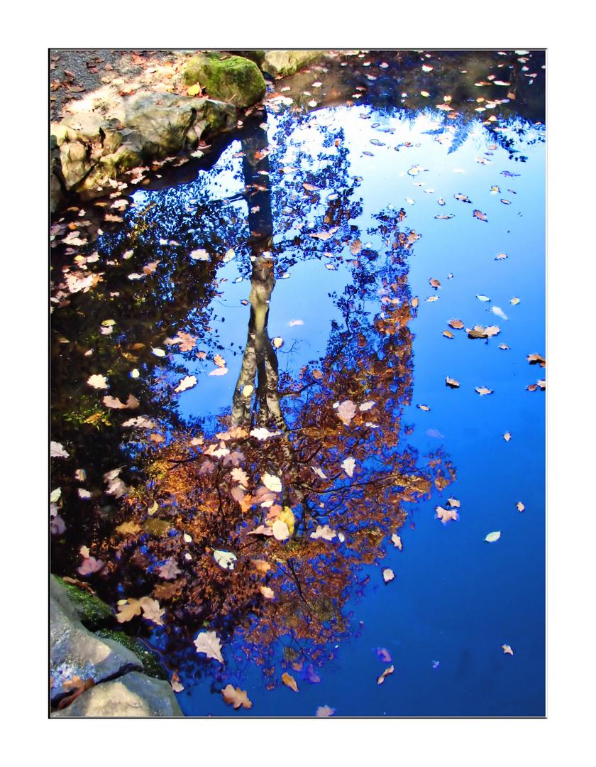 Baum Herbstspiegelung