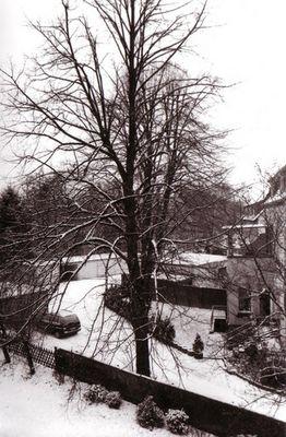 Baum hinterm Haus
