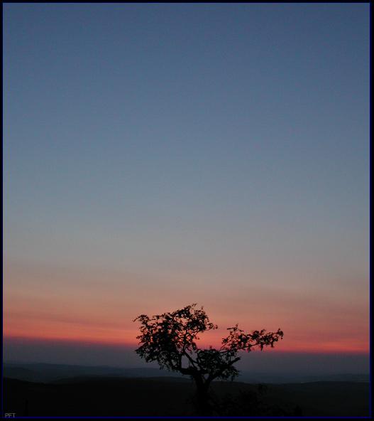 Baum im Abendlicht auf dem Fichtelberg. Sachsen