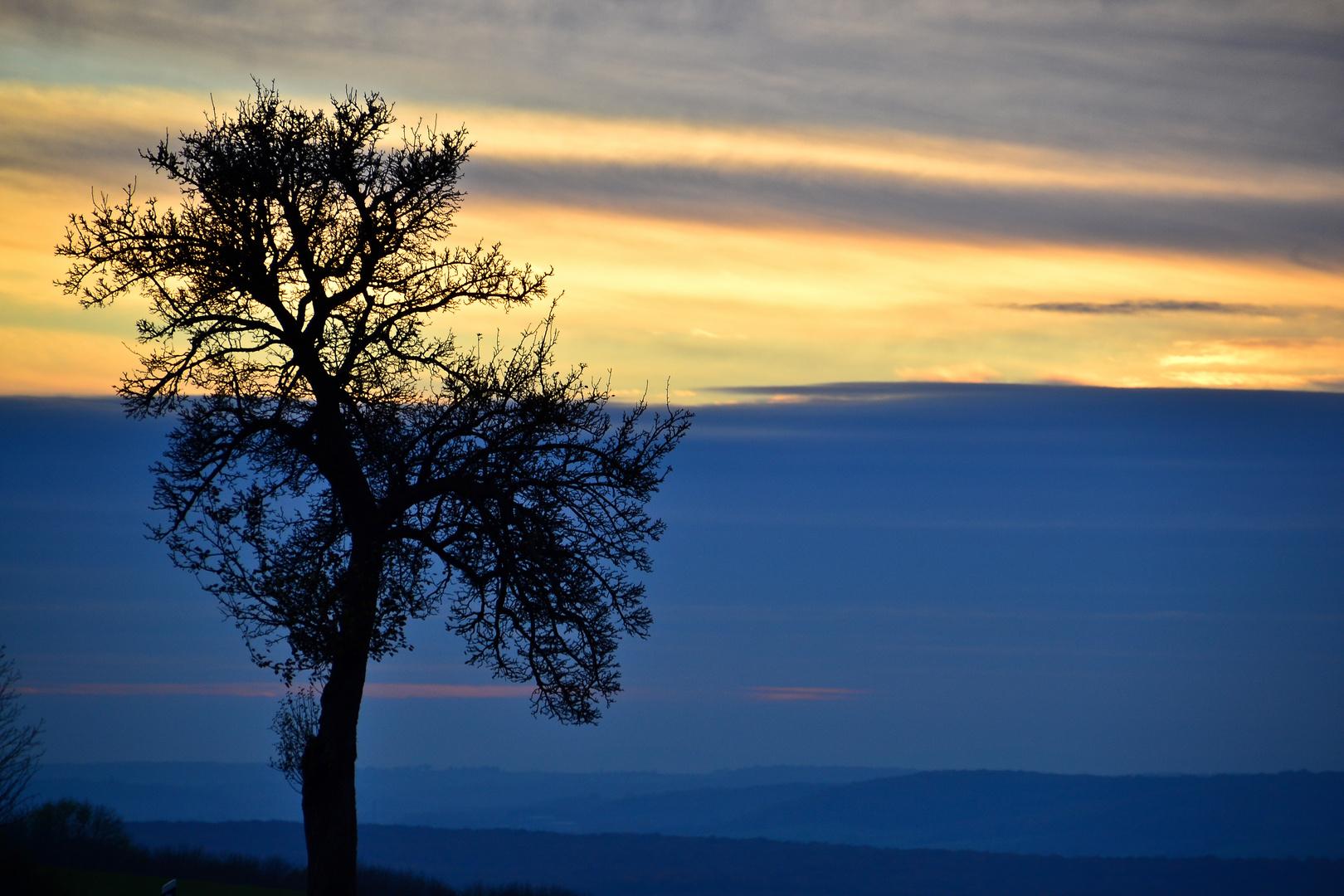 """""""Baum im Abendlicht"""""""