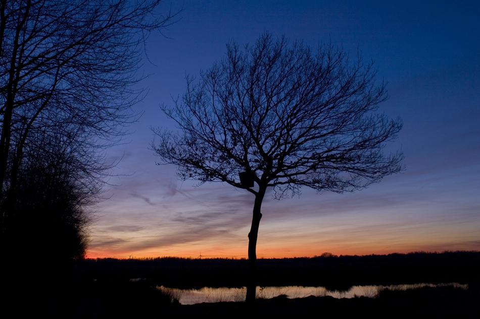 Baum im Abendlicht im Emsdettener Venn