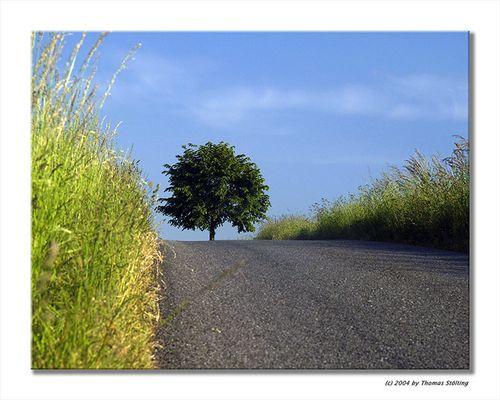 Baum im Bergischen Land