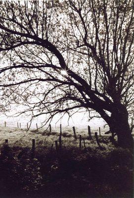 Baum im Bruch
