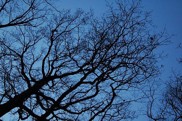 Baum im Dämmerlicht