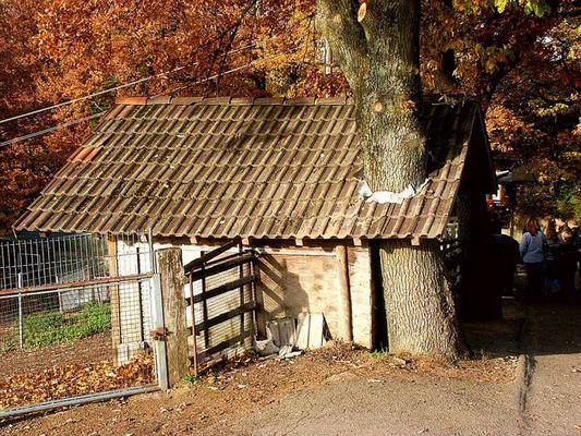 Baum im Dammwildstall