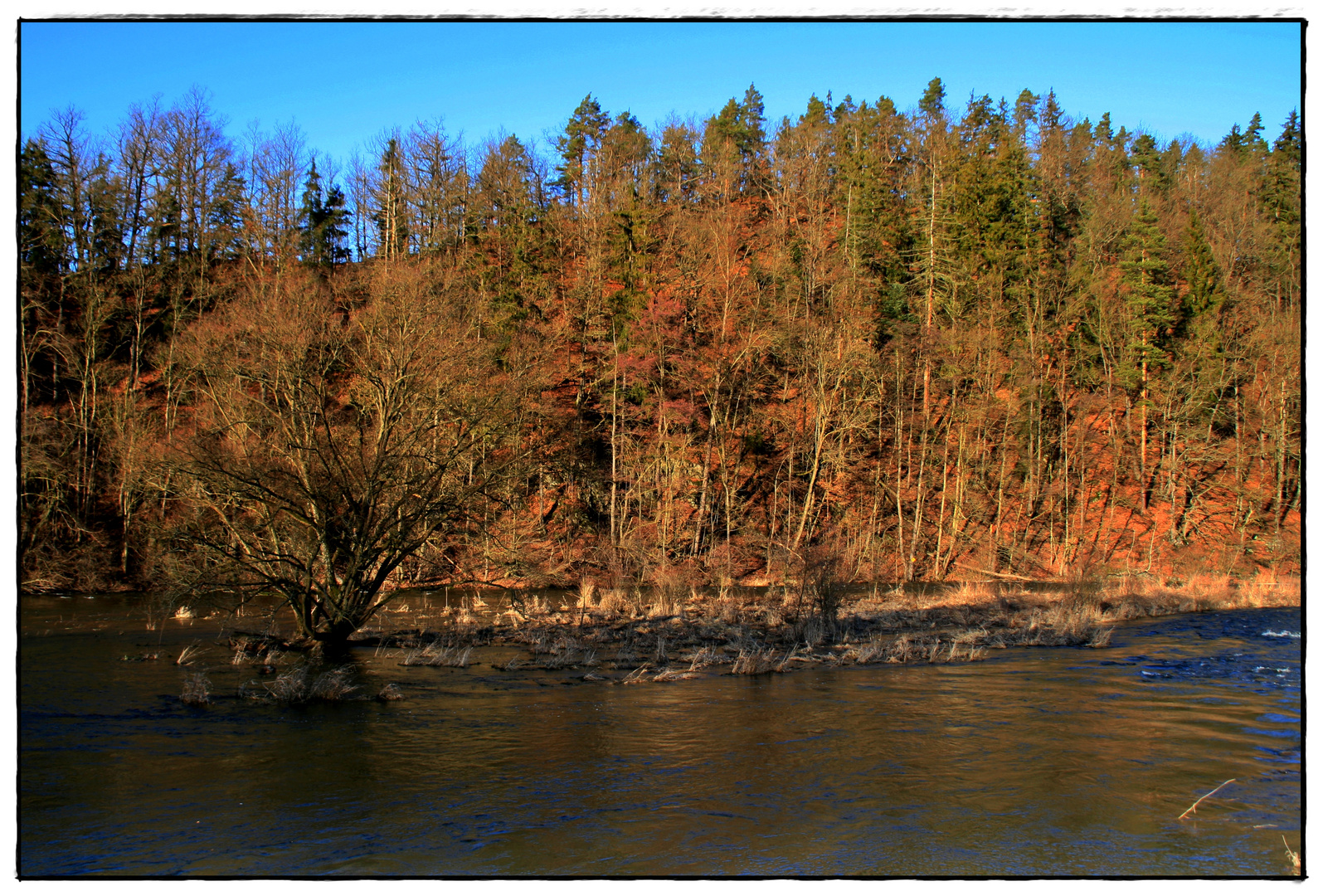 Baum im Fluß...