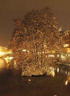 Baum im Fluß