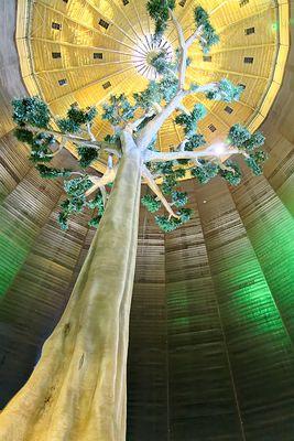 Baum im Gasometer