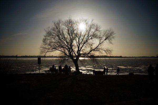 Baum im Gegenlich #2