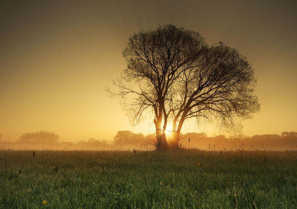 Baum im Gegenlicht