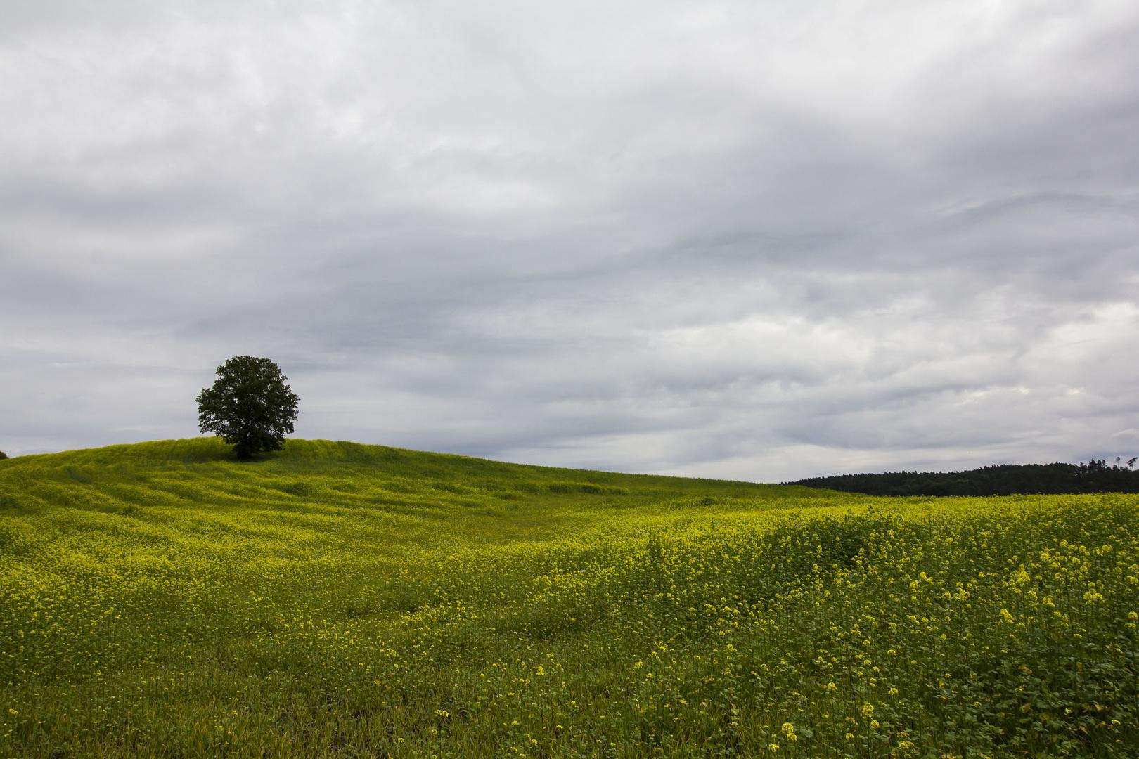 Baum im gelben Feld