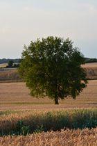 Baum im Getreide