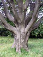 Baum im Hama Rikyu Garten