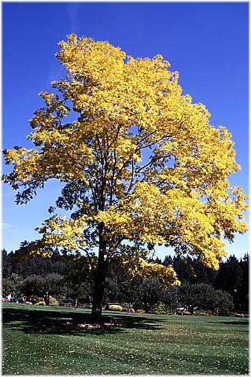 Baum im Herbst