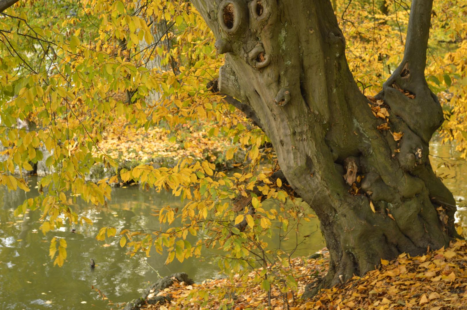 Baum im Herbst am Weiher