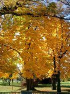 Baum im Herbstgewand