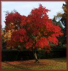 Baum im Herbstlook