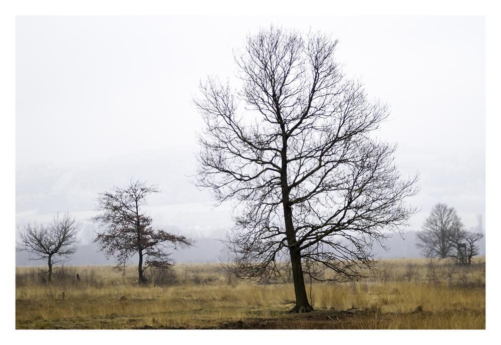 Baum im Hiller Moor 2. Versuch
