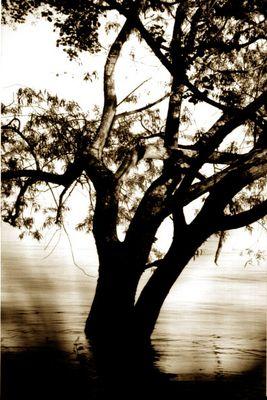 Baum im Hochwasser