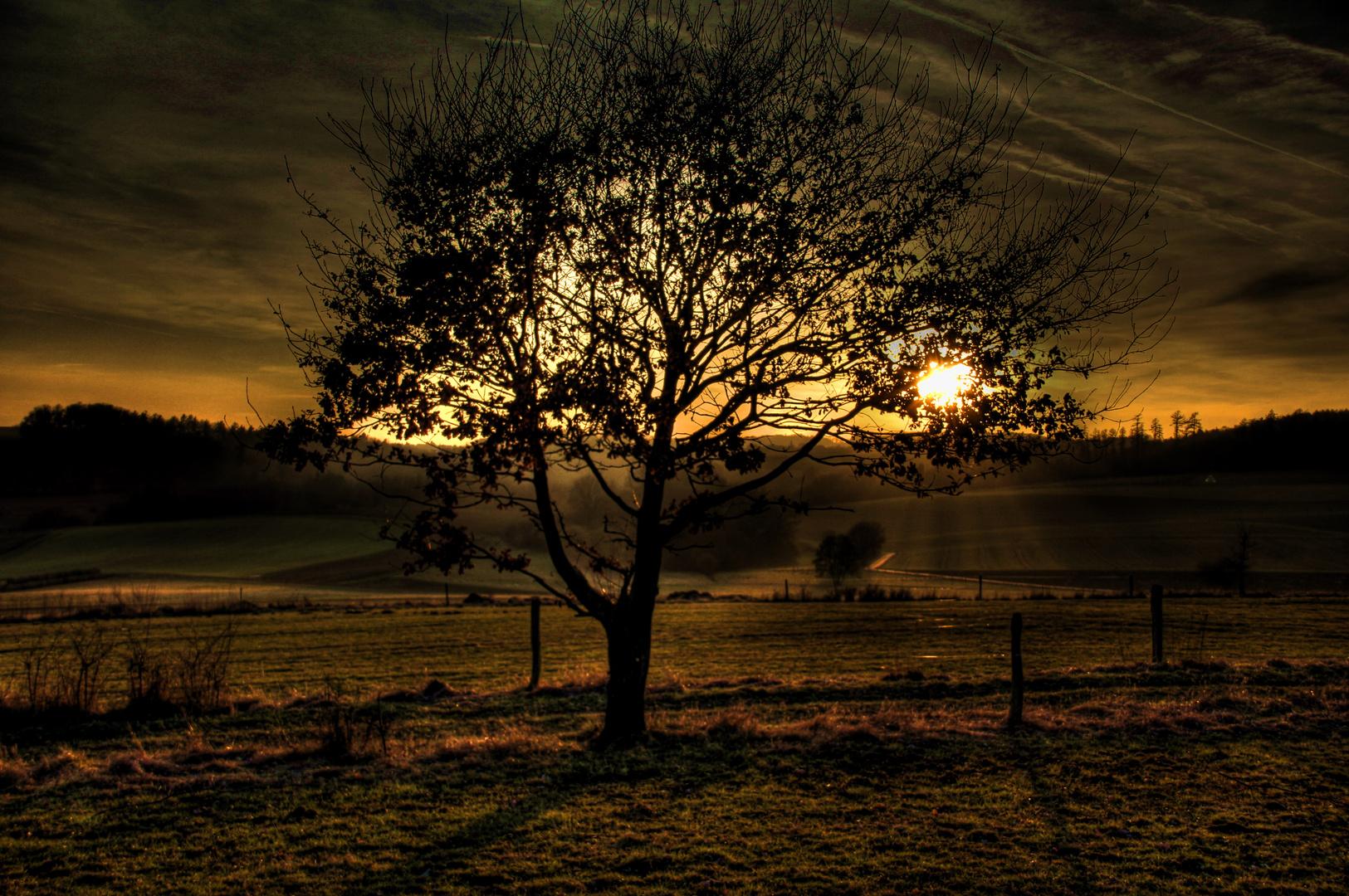 Baum im letzten Licht