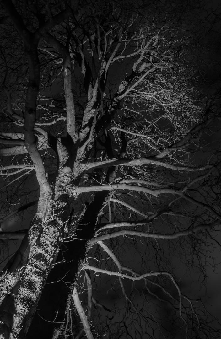 Baum im lichten Dunkel