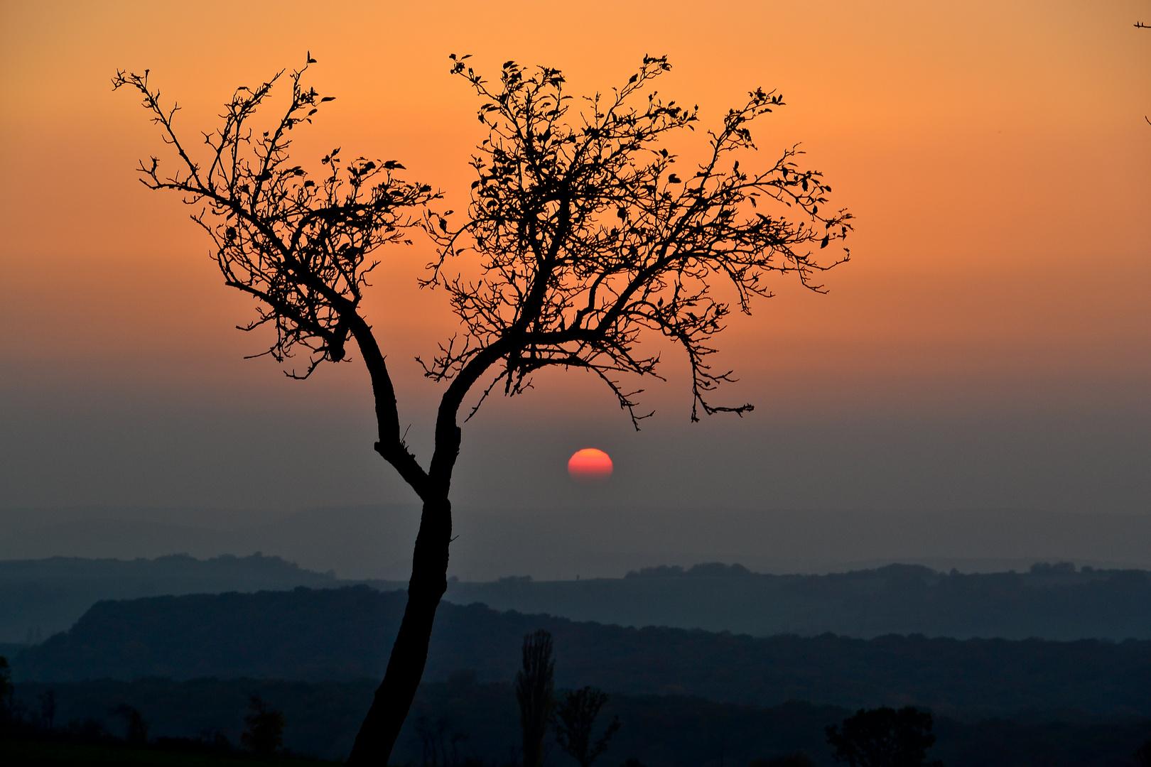 Baum im lothringer Sonnenuntergang