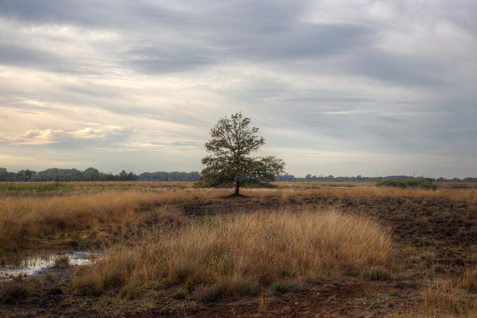 Baum im Moor