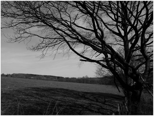 Baum im Morgengrauen