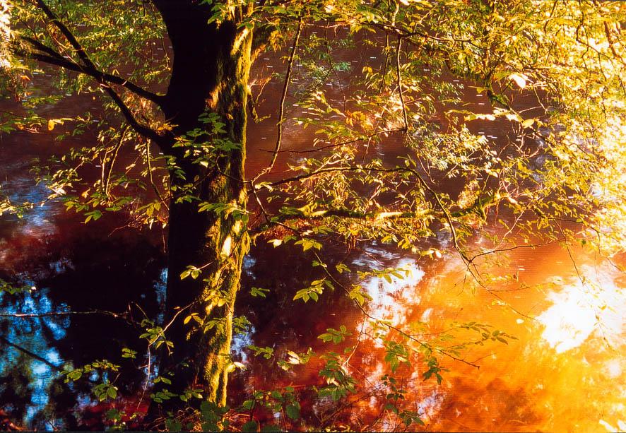 Baum im Morgenlicht