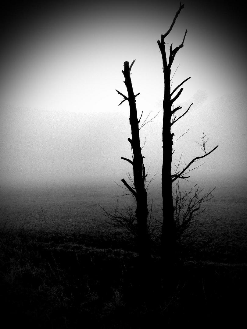 Baum im Morgennebel März