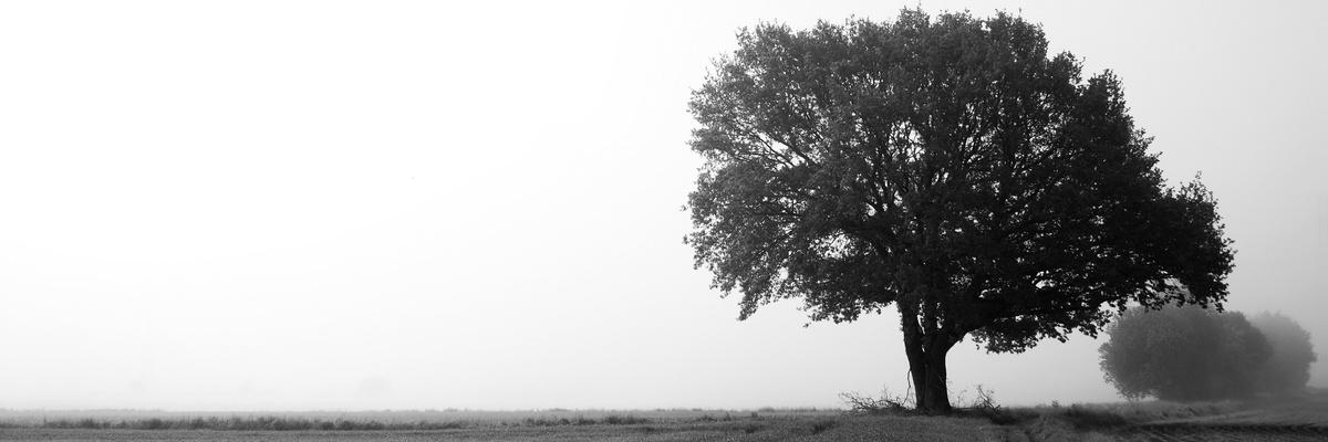 Baum im Nebel 2