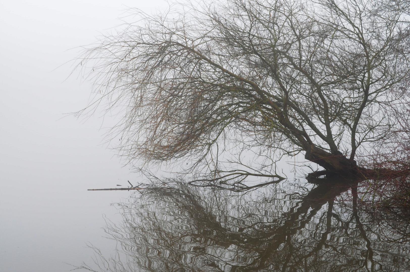 Baum im Nebel am See