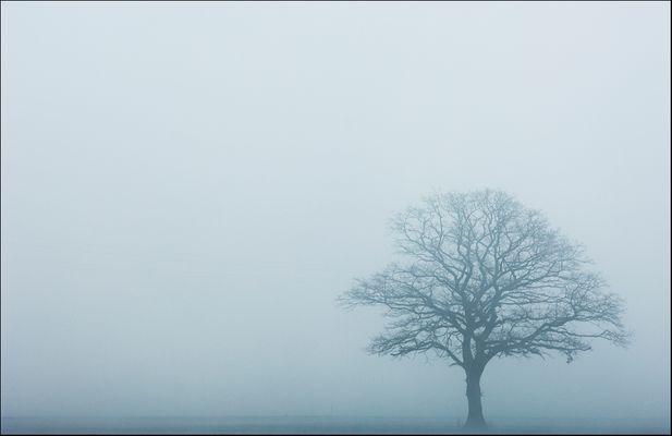 ...Baum im Nebel