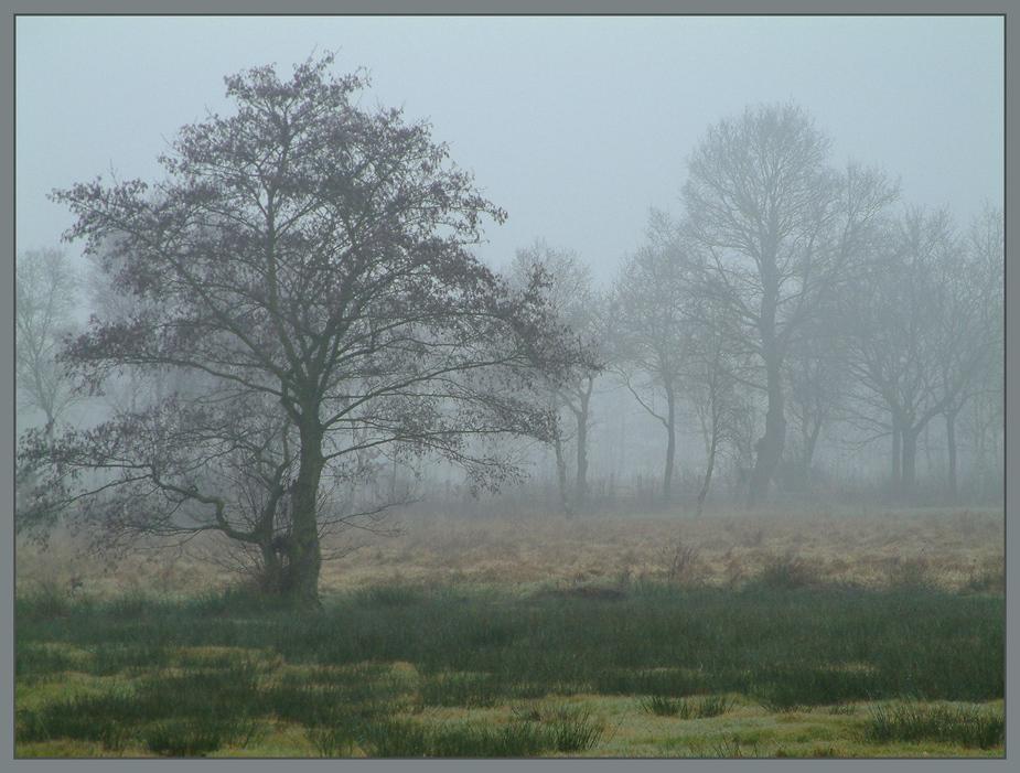 Baum im Nebel im Bokeler Ostermoor