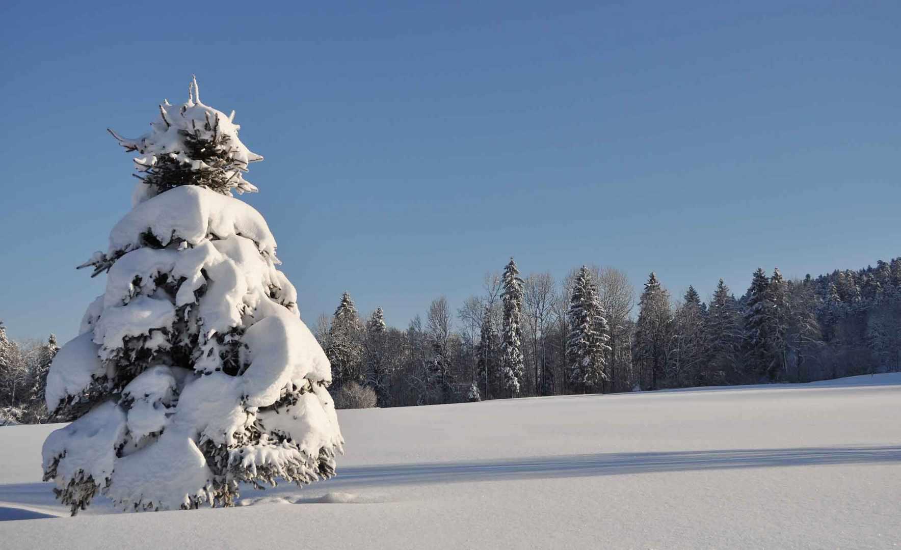 Baum im Neuschnee