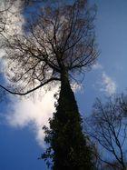 Baum im November