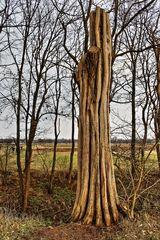 Baum im Rieselfeld