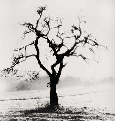 Baum im Saargau