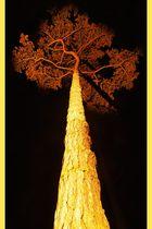 Baum im Schlosspark