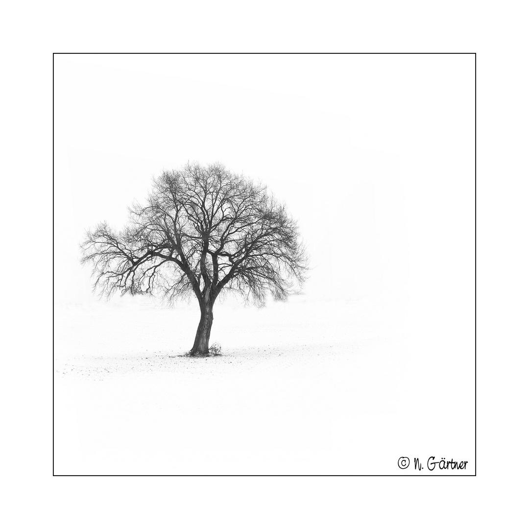 baum im schnee foto bild jahreszeiten winter natur bilder auf fotocommunity. Black Bedroom Furniture Sets. Home Design Ideas