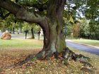 Baum im September